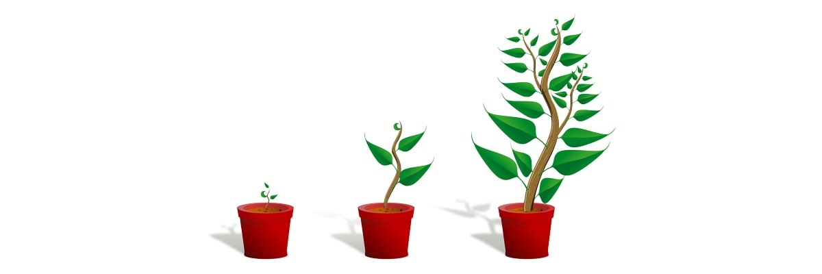 Kaizen - organic growth